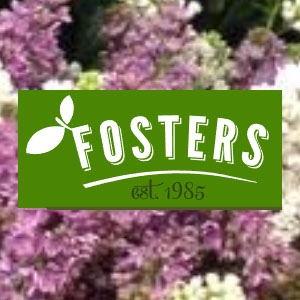 Fosters of Chapel