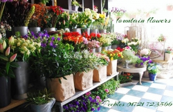 Fountain Flowers
