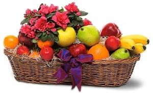 Fresh Fruit And Plant Basket