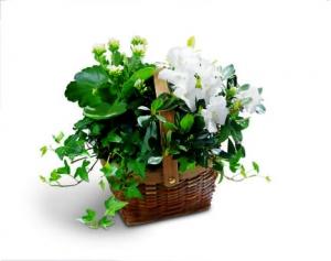 FTD White Assortment Basket