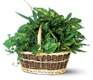 Green Plant Basket