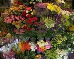 Kingston Florist ACT