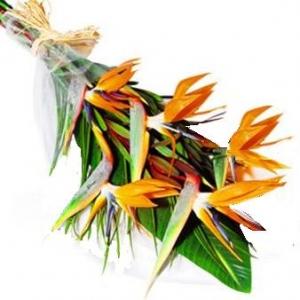 Lanzarote Flower