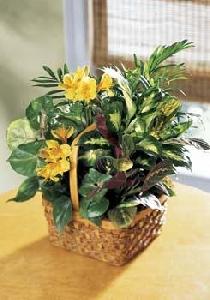 Large Euro Basket Garden With Fresh Cut Flowers