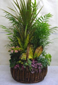 Large Planted Basket