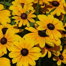 Manor Flowers