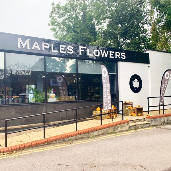 Maples Flowers