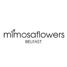 Mimosa Flowers Belfast