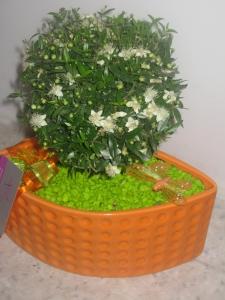 Mirtus Orange