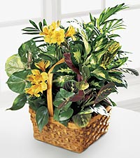 Mixed Plant Basket With Fresh Flowers
