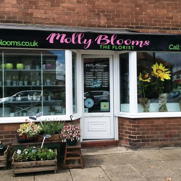 Molly Blooms The Florist