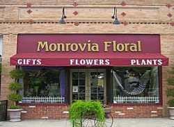 Monrovia Floral