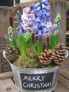 Natural Christmas Hyacinths