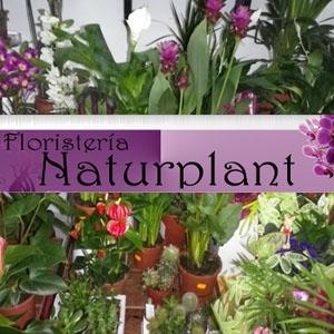 Naturplant