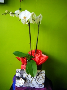 Orchid And Chocolates Gift Set