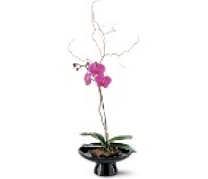 Orchid In Large Bowl.