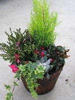 Outdoor Planted Barrel