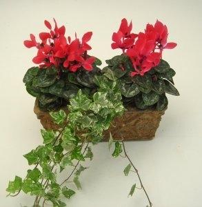 Plant Mix
