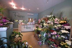 Poppy's Of Thirroul