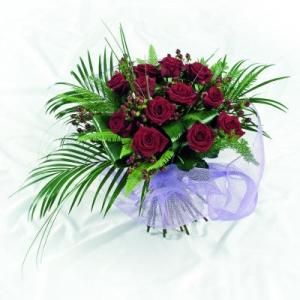 Red Rose Aqua Pack