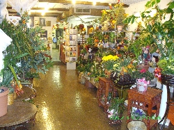 Rosery Florist ltd