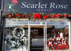 Scarlet Rose Florist