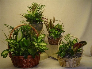 Selection Of House Plants In A Basket