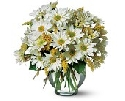 Simply Daisies Bouquet