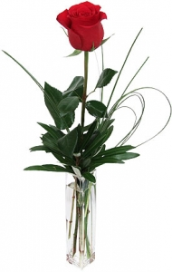 Single Rose In Bud Vase
