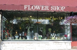 Snapdragon Flowers of Elm Grove