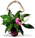 Spathiphyllum Plant With Orchids