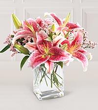 Stargazer Lilies Cubed