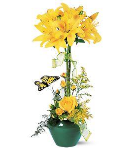 Sunshine 'n Butterflies