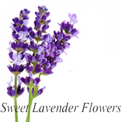 Sweet Lavender Flowers