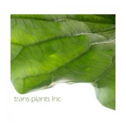 Trans-Plants Inc