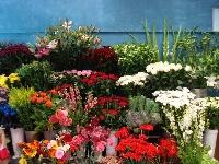 Tropicana Florist