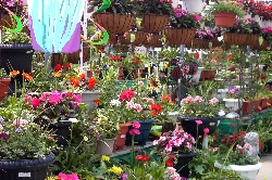 Van Luyk Floral Services