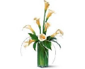 Vased Calla Lilies