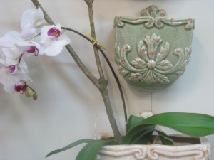 Wall planters and Phalaenopsis orchids