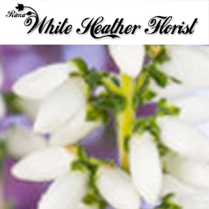 White Heather Florists