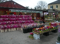 Wiltshires Florist Ltd