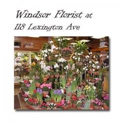 Windsor Florist